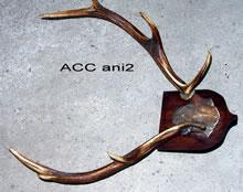 ACC ANI2