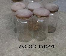 ACC BT24