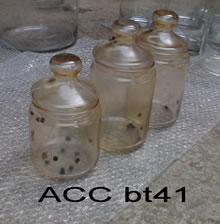 ACC BT41