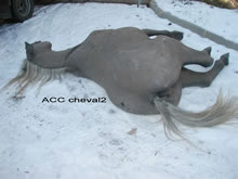 ACC CHEVAL2