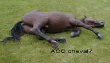 ACC CHEVAL7