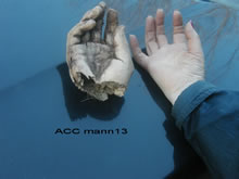 ACC MANN13