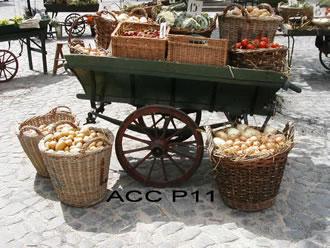 ACC P11