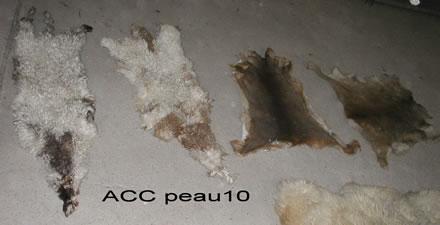 ACC PEAU10