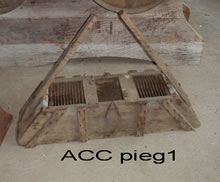 ACC PIEG1