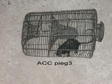 ACC PIEG3