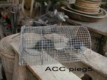 ACC PIEG5