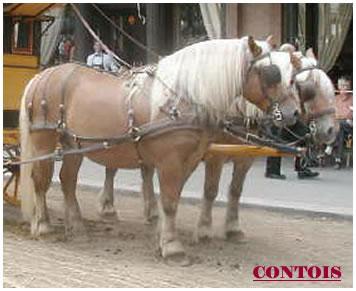 Contois1