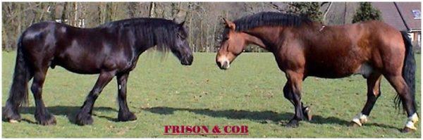 frison+cob1