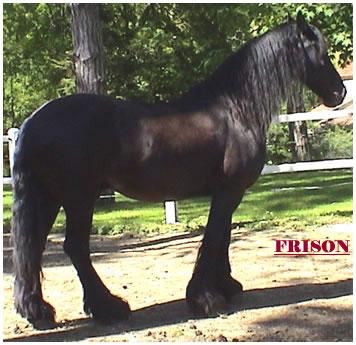 frisons4